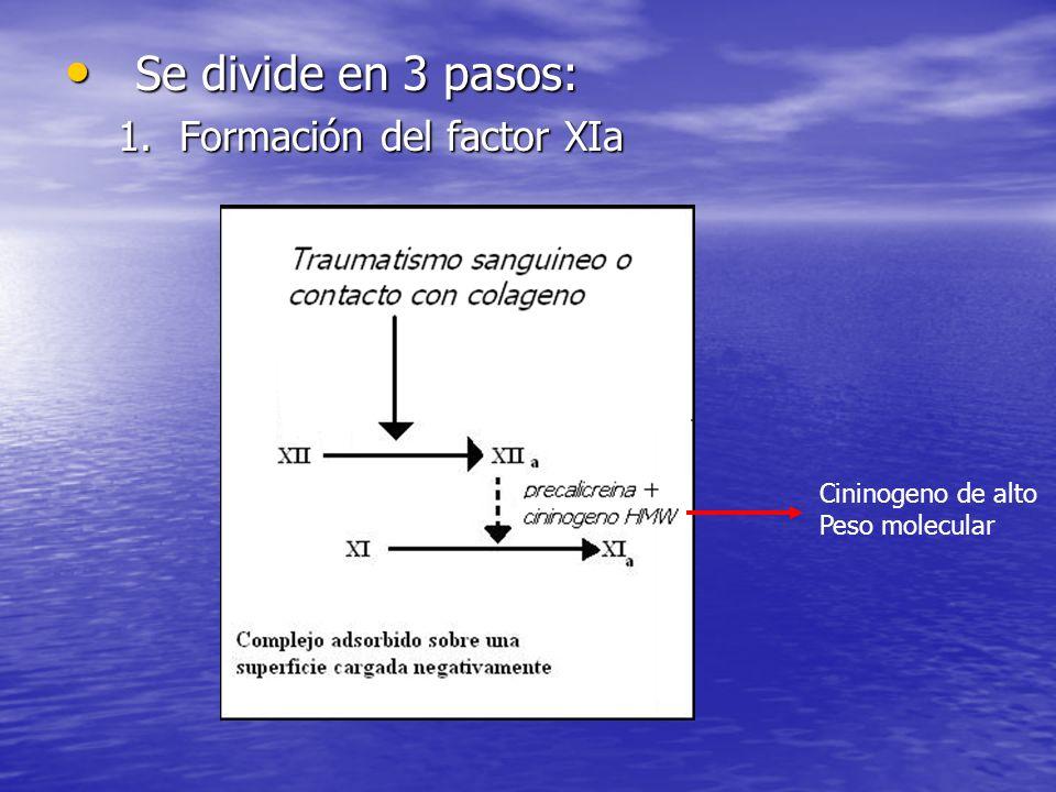 Se divide en 3 pasos: Se divide en 3 pasos: 1.Formación del factor XIa Cininogeno de alto Peso molecular