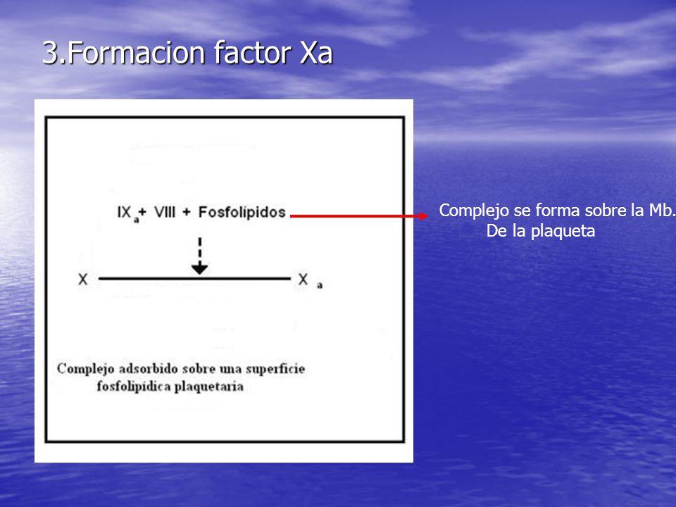 3.Formacion factor Xa Complejo se forma sobre la Mb. De la plaqueta