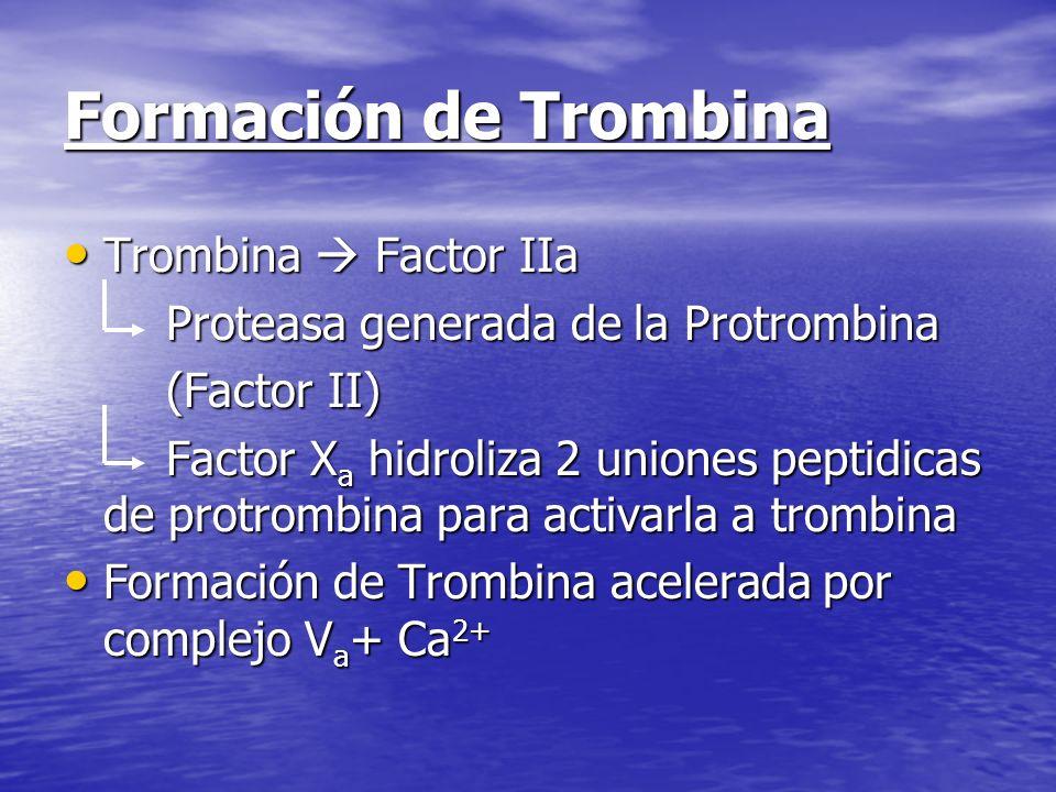 Formación de Trombina Trombina Factor IIa Trombina Factor IIa Proteasa generada de la Protrombina Proteasa generada de la Protrombina (Factor II) (Fac