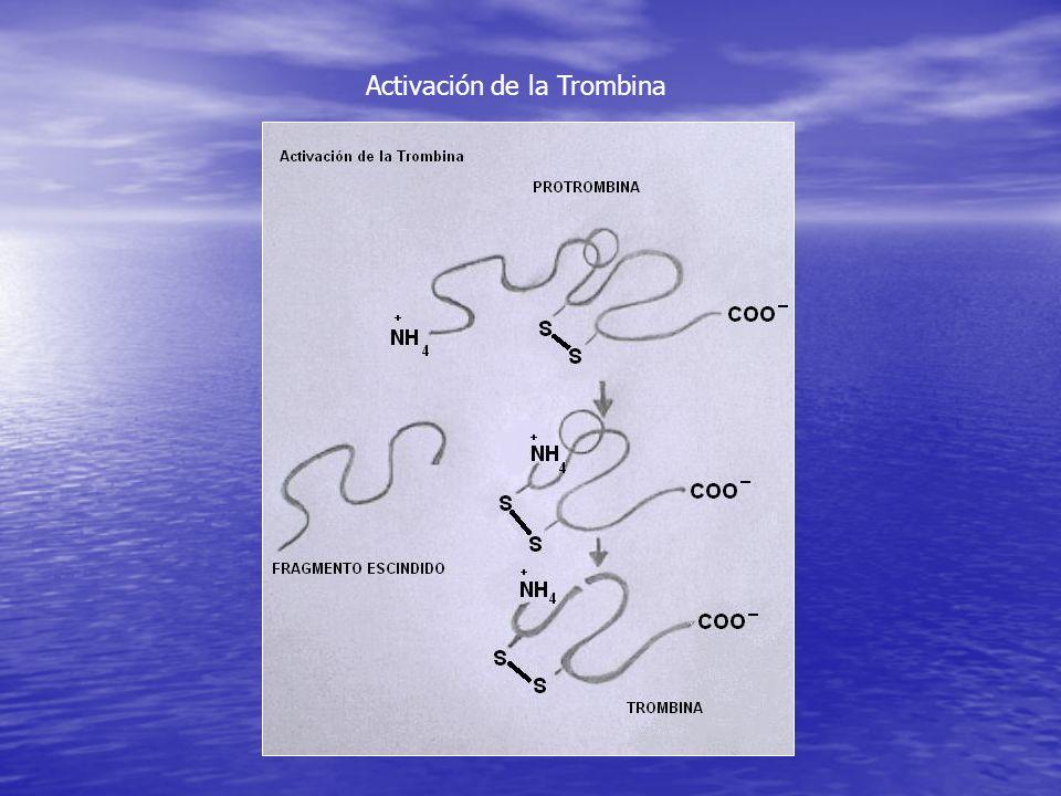 Activación de la Trombina
