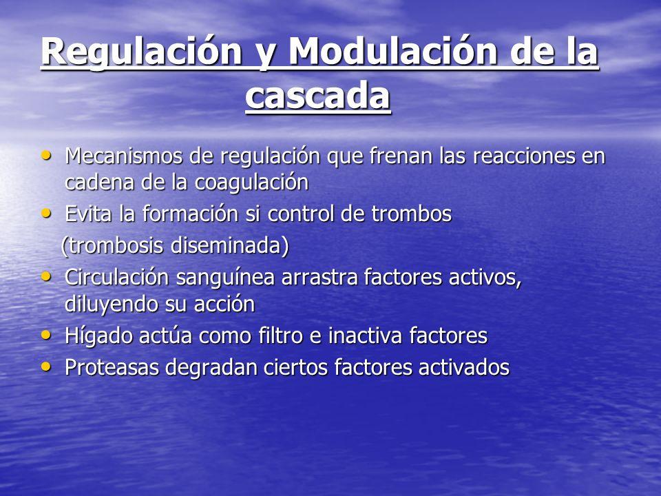 Regulación y Modulación de la cascada Mecanismos de regulación que frenan las reacciones en cadena de la coagulación Mecanismos de regulación que fren