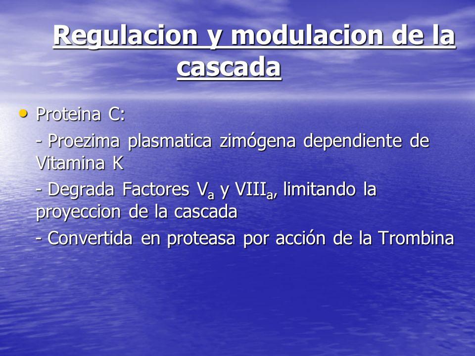 Regulacion y modulacion de la cascada Proteina C: Proteina C: - Proezima plasmatica zimógena dependiente de Vitamina K - Proezima plasmatica zimógena