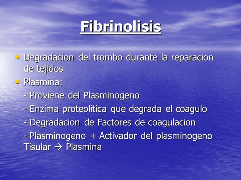 Fibrinolisis Degradacion del trombo durante la reparacion de tejidos Degradacion del trombo durante la reparacion de tejidos Plasmina: Plasmina: - Pro