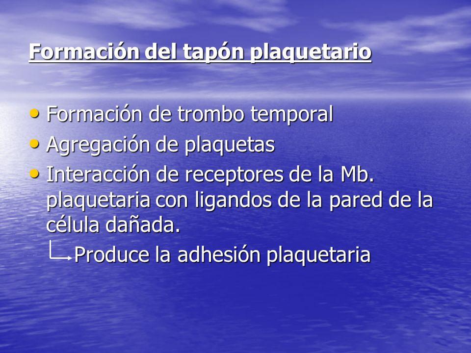 Formación del tapón plaquetario Formación de trombo temporal Formación de trombo temporal Agregación de plaquetas Agregación de plaquetas Interacción