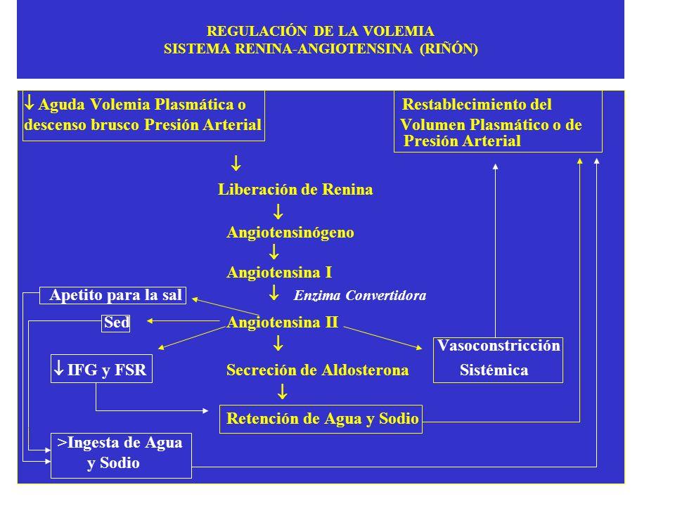 REGULACIÓN DE LA VOLEMIA SISTEMA RENINA-ANGIOTENSINA (RIÑÓN) Aguda Volemia Plasmática o Restablecimiento del descenso brusco Presión Arterial Volumen