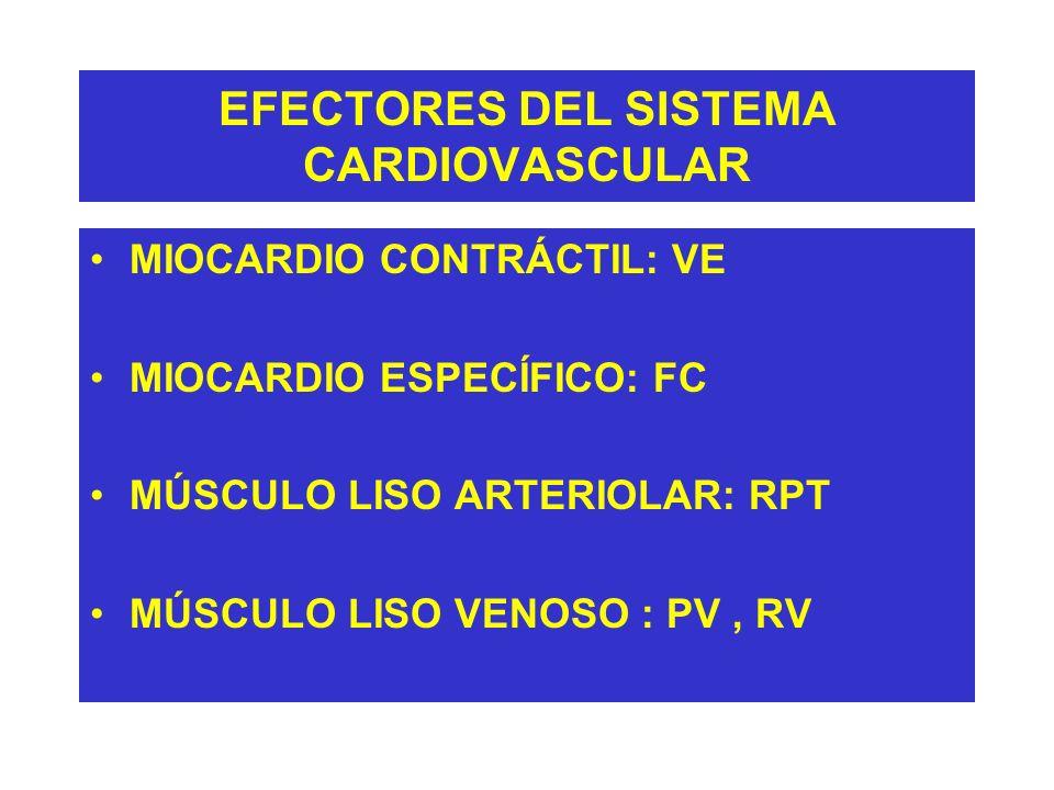 REGULACIÓN DE LA VOLEMIA SISTEMA RENINA-ANGIOTENSINA (RIÑÓN) Aguda Volemia Plasmática o Restablecimiento del descenso brusco Presión Arterial Volumen Plasmático o de Presión Arterial Liberación de Renina Angiotensinógeno Angiotensina I Apetito para la sal Enzima Convertidora SedAngiotensina II Vasoconstricción IFG y FSR Secreción de Aldosterona Sistémica Retención de Agua y Sodio >Ingesta de Agua y Sodio