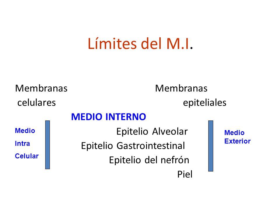 Límites del M.I. Membranas celularesepiteliales MEDIO INTERNO Epitelio Alveolar Epitelio Gastrointestinal Epitelio del nefrón Piel Medio Intra Celular