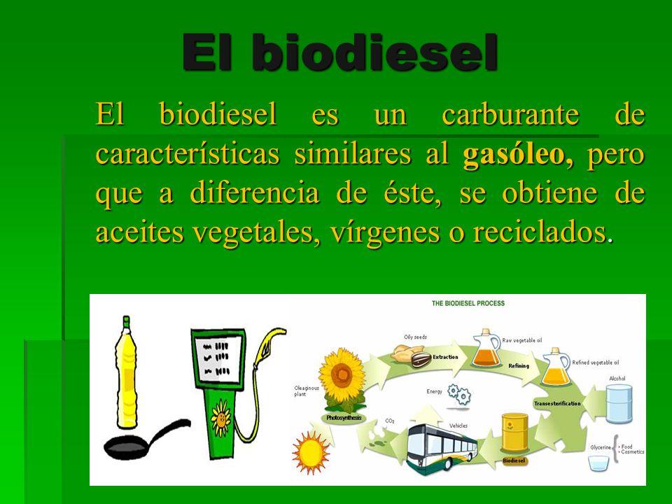 El biodiesel El biodiesel es un carburante de características similares al gasóleo, pero que a diferencia de éste, se obtiene de aceites vegetales, ví
