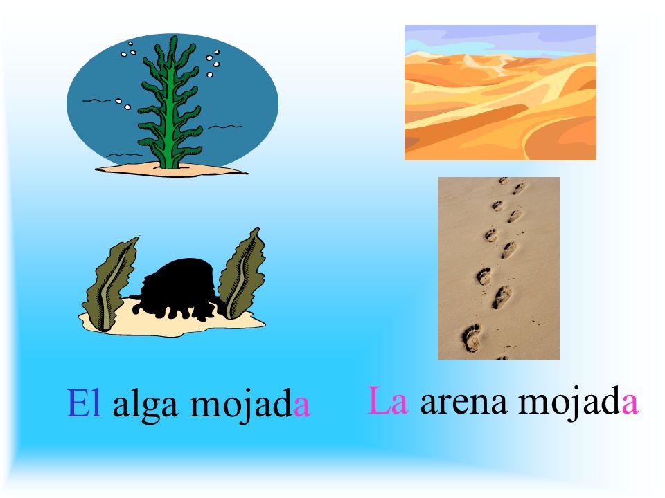 El alga mojada La arena mojada