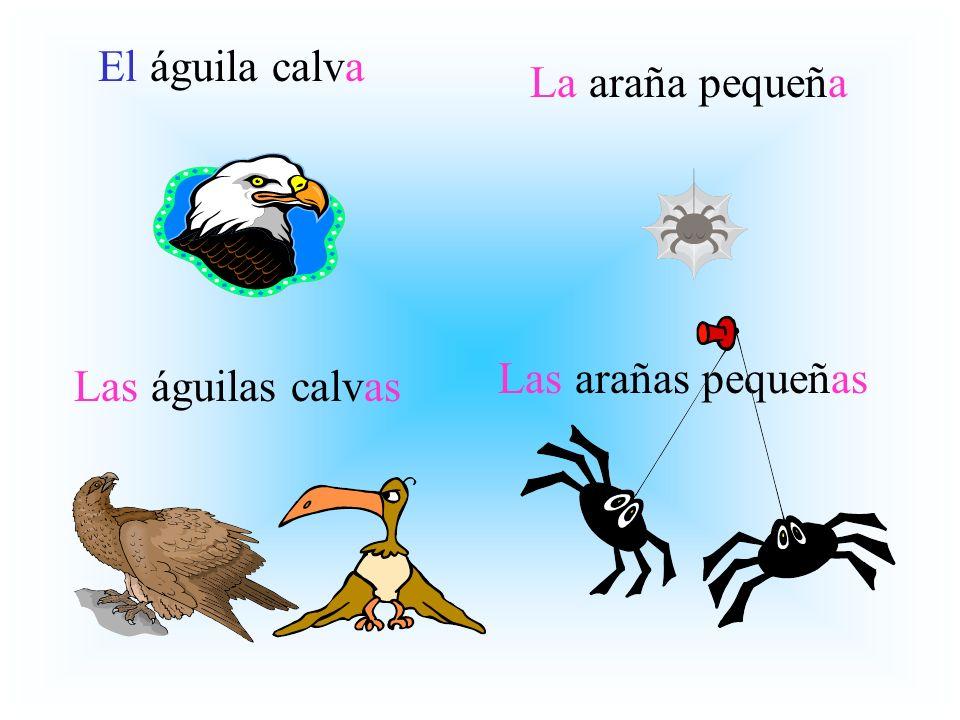 El águila calva Las águilas calvas La araña pequeña Las arañas pequeñas
