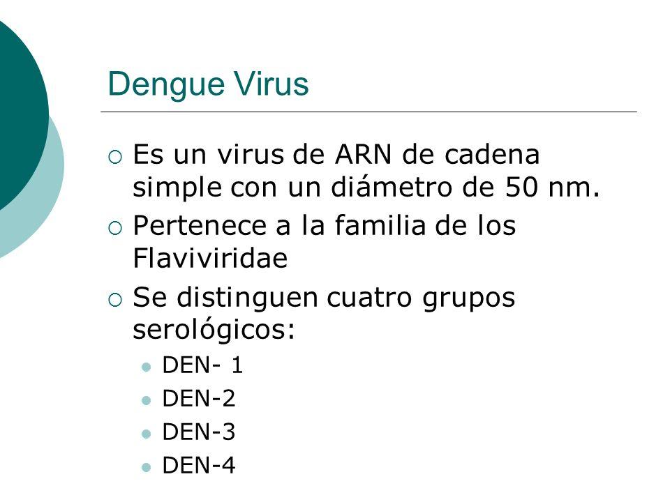 Dengue Virus Es un virus de ARN de cadena simple con un diámetro de 50 nm. Pertenece a la familia de los Flaviviridae Se distinguen cuatro grupos sero