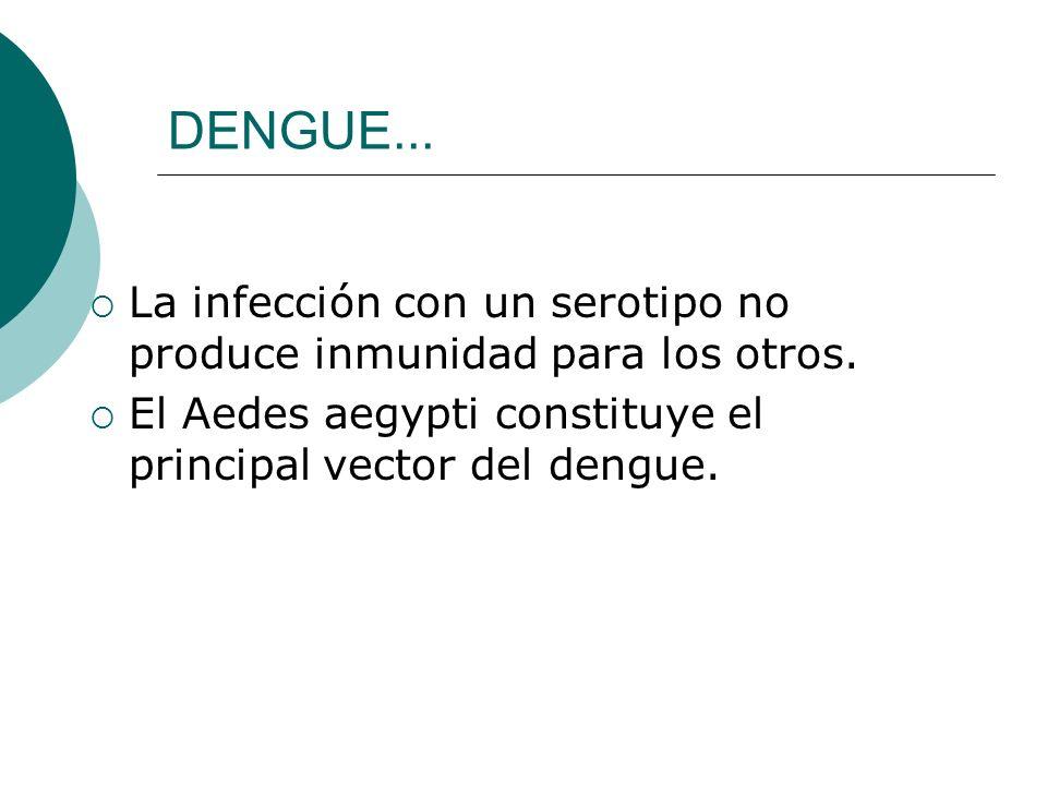 DENGUE... La infección con un serotipo no produce inmunidad para los otros. El Aedes aegypti constituye el principal vector del dengue.