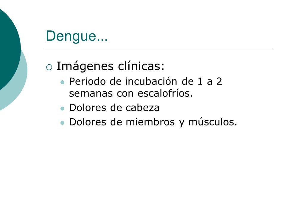 Dengue... Imágenes clínicas: Periodo de incubación de 1 a 2 semanas con escalofríos. Dolores de cabeza Dolores de miembros y músculos.