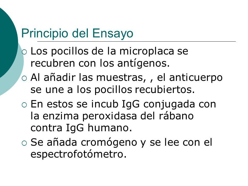 Principio del Ensayo Los pocillos de la microplaca se recubren con los antígenos. Al añadir las muestras,, el anticuerpo se une a los pocillos recubie