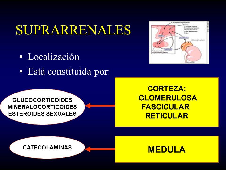 SUPRARRENALES Localización Está constituida por: CORTEZA: GLOMERULOSA FASCICULAR RETICULAR MEDULA GLUCOCORTICOIDES MINERALOCORTICOIDES ESTEROIDES SEXU
