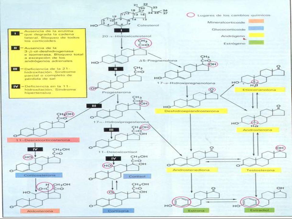 Causas de insuficiencia adrenal SECUNDARIAS Y TERCIARIAS : Aislada deficiencia de CRH.