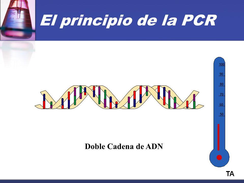 50 60 70 80 90 100 TA Doble Cadena de ADN El principio de la PCR