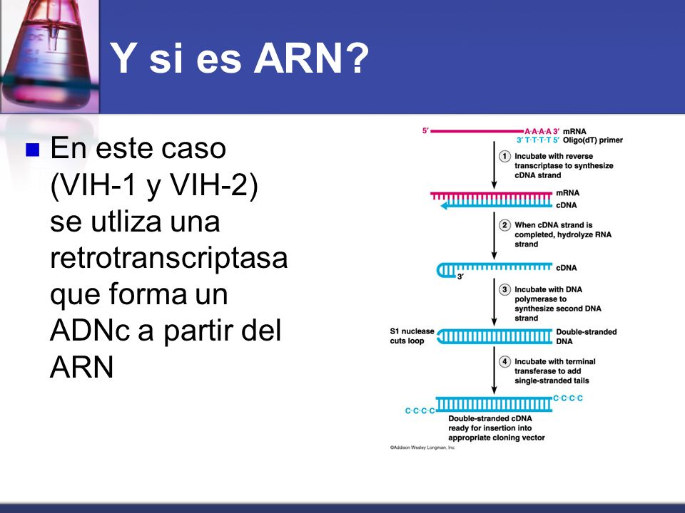 Y si es ARN? En este caso (VIH-1 y VIH-2) se utliza una retrotranscriptasa que forma un ADNc a partir del ARN