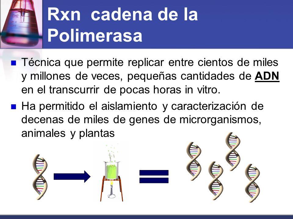 Historia 1955 : Se descubre ADN polimerasa ( Arthur Komberg).