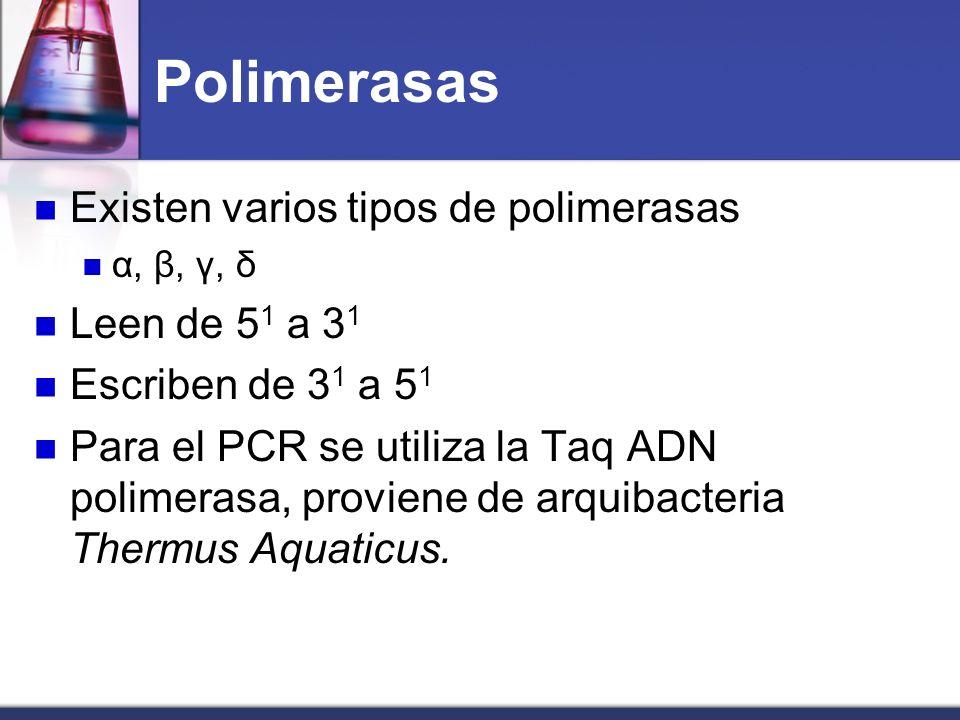 Polimerasas Existen varios tipos de polimerasas α, β, γ, δ Leen de 5 1 a 3 1 Escriben de 3 1 a 5 1 Para el PCR se utiliza la Taq ADN polimerasa, provi