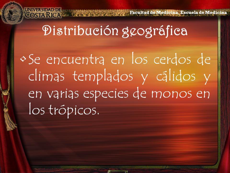 Distribución geográfica Se encuentra en los cerdos de climas templados y cálidos y en varias especies de monos en los trópicos. Facultad de Medicina,