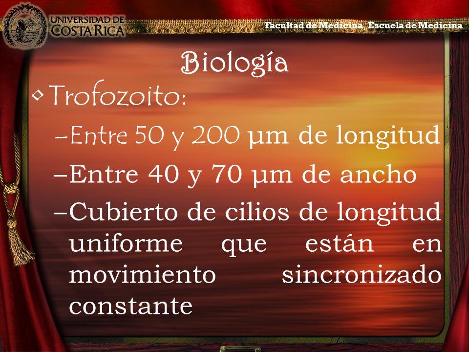 Biología Trofozoito: –Entre 50 y 200 μm de longitud –Entre 40 y 70 μm de ancho –Cubierto de cilios de longitud uniforme que están en movimiento sincro