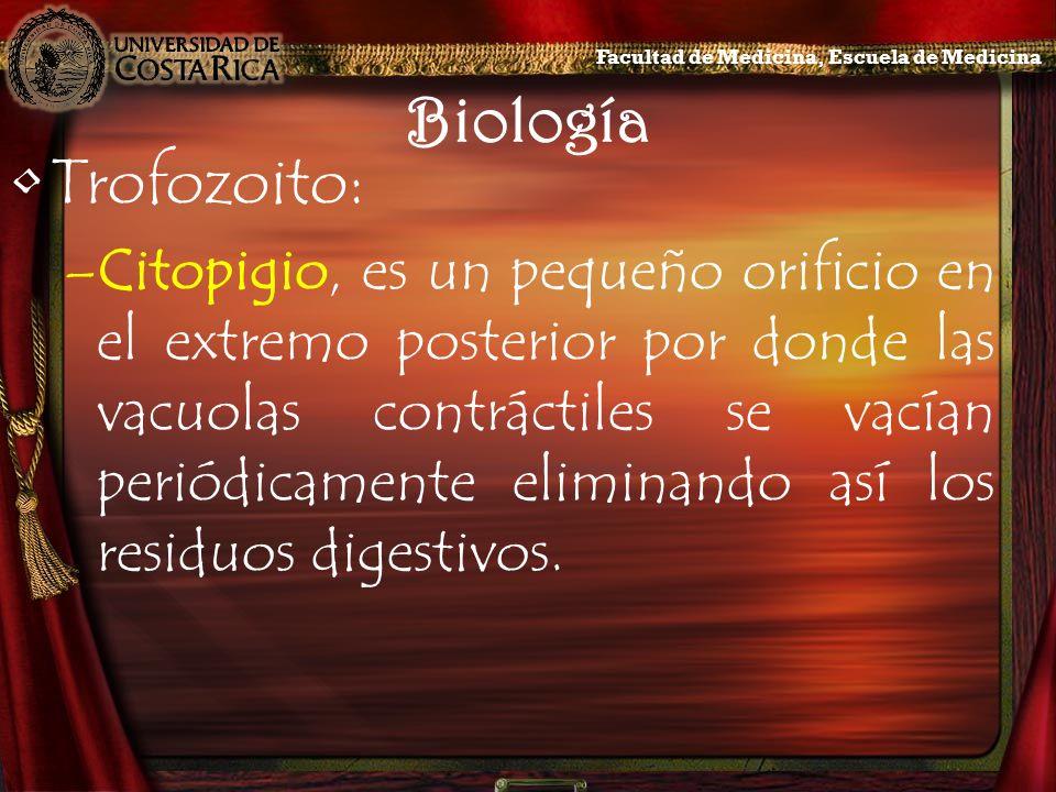 Biología Trofozoito: –Citopigio, es un pequeño orificio en el extremo posterior por donde las vacuolas contráctiles se vacían periódicamente eliminand
