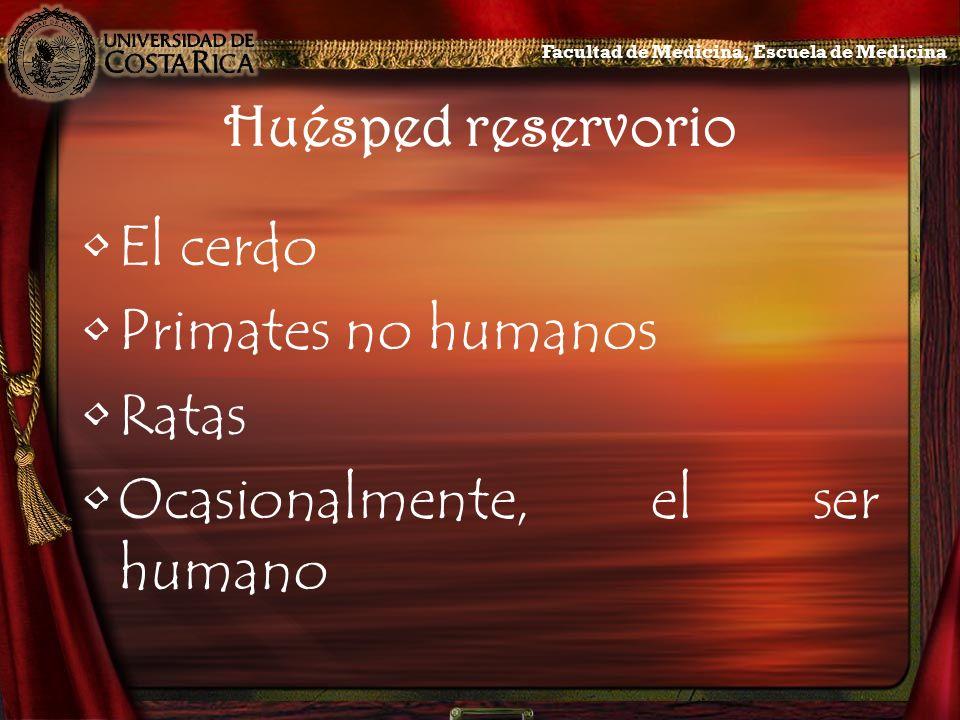 Huésped reservorio El cerdo Primates no humanos Ratas Ocasionalmente, el ser humano Facultad de Medicina, Escuela de Medicina