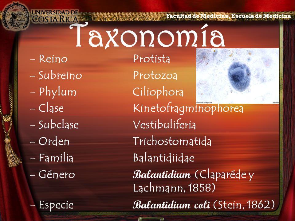 Taxonomía –ReinoProtista –SubreinoProtozoa –PhylumCiliophora –ClaseKinetofragminophorea –SubclaseVestibuliferia –OrdenTrichostomatida –FamiliaBalantid