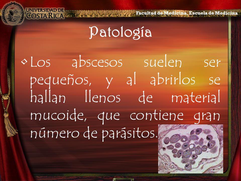 Patología Los abscesos suelen ser pequeños, y al abrirlos se hallan llenos de material mucoide, que contiene gran número de parásitos. Facultad de Med