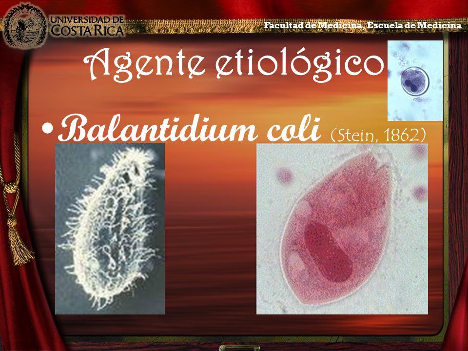 Agente etiológico, sinónimos Paramoecium coli (Malmsten, 1857) Leukophyra coli (Stein, 1860) Holophyra coli (Leuckart, 1863) Facultad de Medicina, Escuela de Medicina