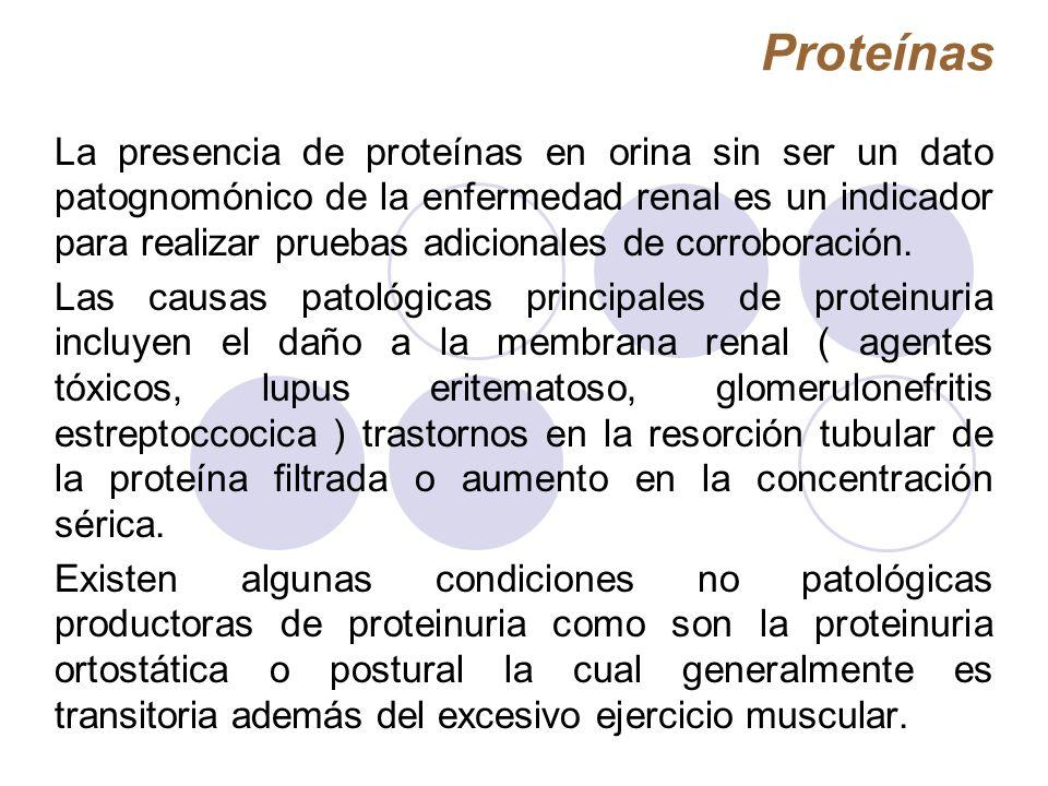 Proteínas La presencia de proteínas en orina sin ser un dato patognomónico de la enfermedad renal es un indicador para realizar pruebas adicionales de