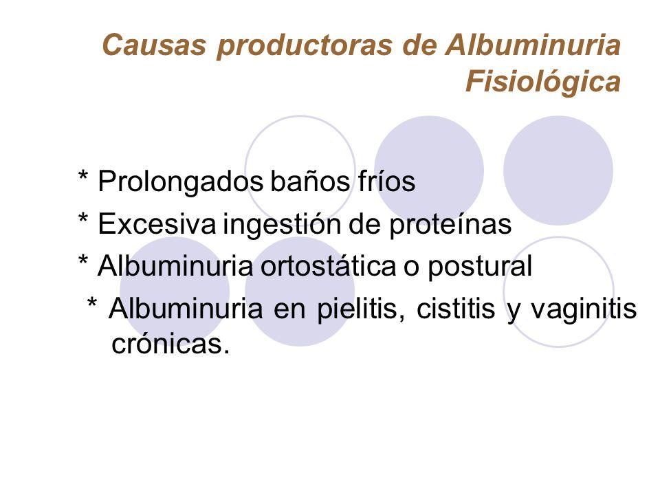 Causas productoras de Albuminuria Fisiológica * Prolongados baños fríos * Excesiva ingestión de proteínas * Albuminuria ortostática o postural * Album