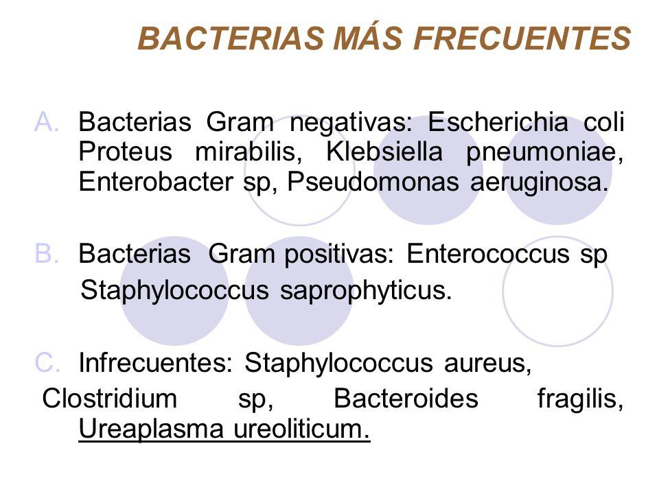 BACTERIAS MÁS FRECUENTES A.Bacterias Gram negativas: Escherichia coli Proteus mirabilis, Klebsiella pneumoniae, Enterobacter sp, Pseudomonas aeruginos