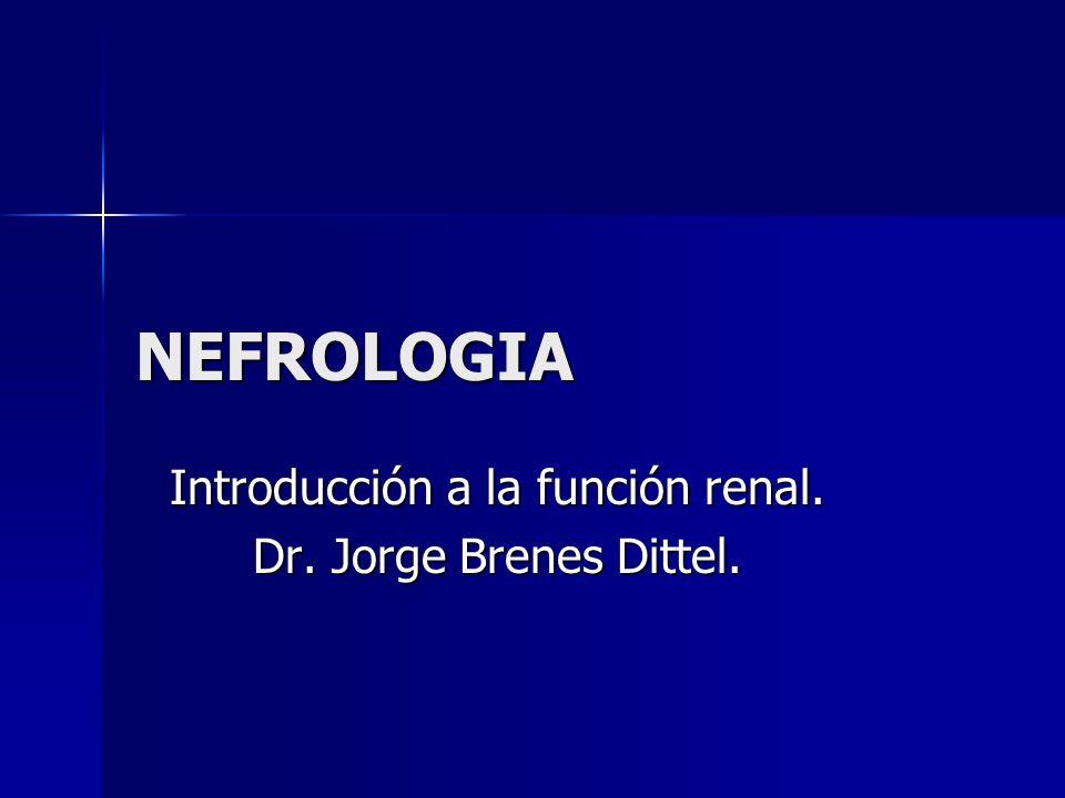 NEFROLOGIA Introducción a la función renal. Dr. Jorge Brenes Dittel.
