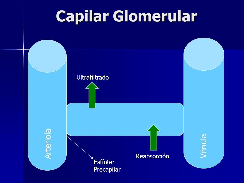 Arteriola Vénula Esfínter Precapilar Ultrafiltrado Reabsorción Capilar Glomerular