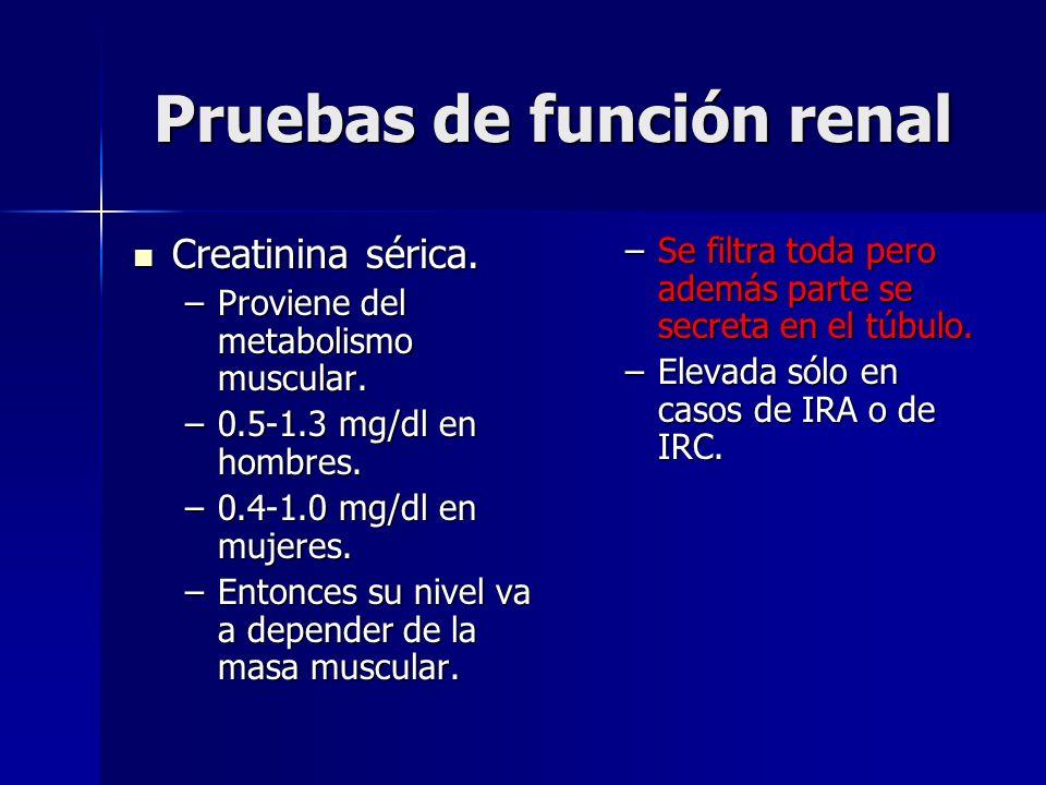 Pruebas de función renal Creatinina sérica. Creatinina sérica. –Proviene del metabolismo muscular. –0.5-1.3 mg/dl en hombres. –0.4-1.0 mg/dl en mujere