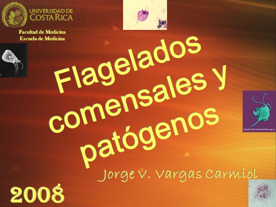 2008 Flagelados comensales y patógenos Jorge V. Vargas Carmiol Facultad de Medicina Escuela de Medicina