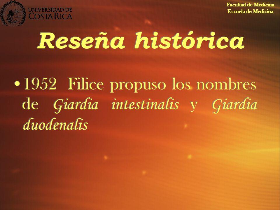 Reseña histórica 1952Filice propuso los nombres de Giardia intestinalis y Giardia duodenalis Facultad de Medicina Escuela de Medicina
