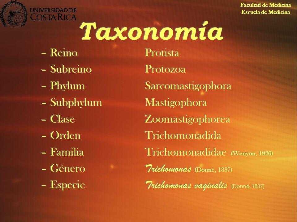 Taxonomía –ReinoProtista –SubreinoProtozoa –PhylumSarcomastigophora –SubphylumMastigophora –ClaseZoomastigophorea –OrdenTrichomonadida –FamiliaTrichom
