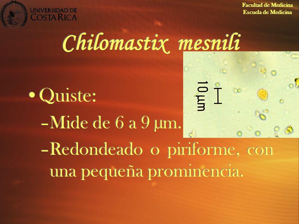 Chilomastix mesnili Quiste: –Mide de 6 a 9 µm. –Redondeado o piriforme, con una pequeña prominencia. Quiste: –Mide de 6 a 9 µm. –Redondeado o piriform
