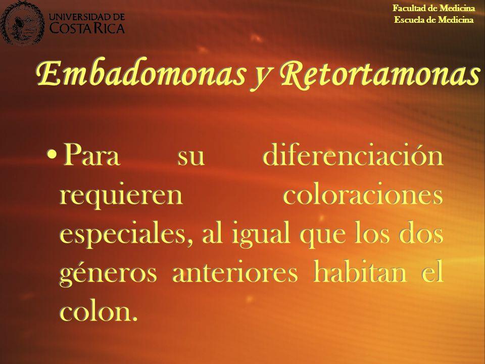 Embadomonas y Retortamonas Para su diferenciación requieren coloraciones especiales, al igual que los dos géneros anteriores habitan el colon. Faculta