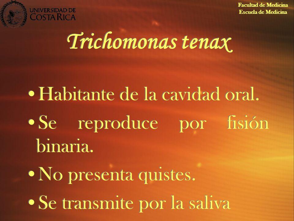 Trichomonas tenax Habitante de la cavidad oral. Se reproduce por fisión binaria. No presenta quistes. Se transmite por la saliva Habitante de la cavid