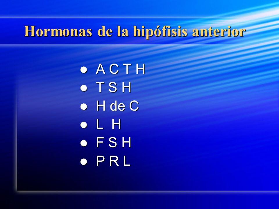 Hormonas de la hipófisis anterior A C T H T S H H de C L H F S H P R L