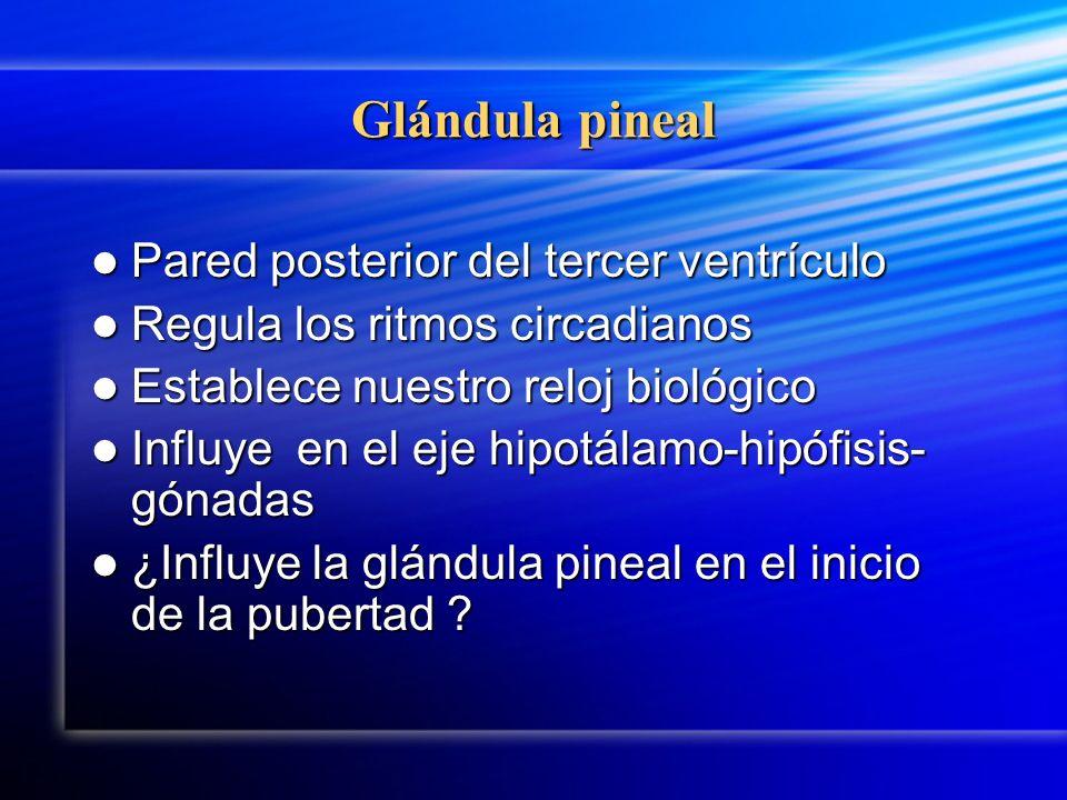 Glándula pineal Pared posterior del tercer ventrículo Pared posterior del tercer ventrículo Regula los ritmos circadianos Regula los ritmos circadiano