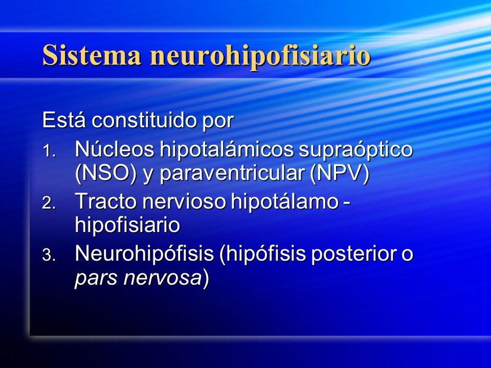 Sistema neurohipofisiario Está constituido por 1. Núcleos hipotalámicos supraóptico (NSO) y paraventricular (NPV) 2. Tracto nervioso hipotálamo - hipo