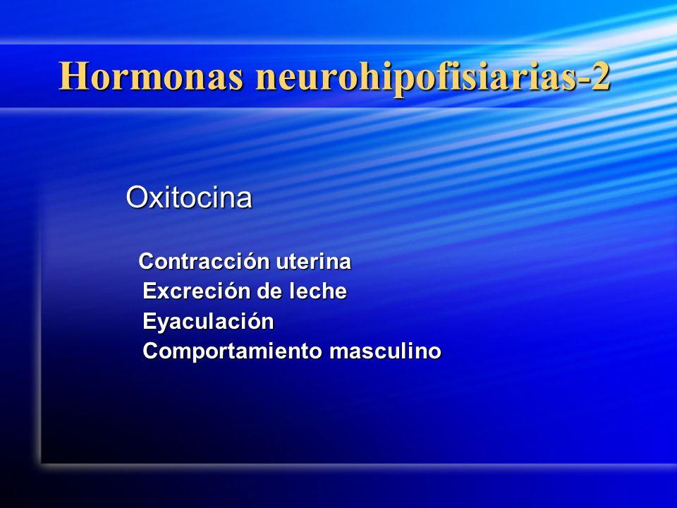 Hormonas neurohipofisiarias-2 Oxitocina Contracción uterina Contracción uterina Excreción de leche Eyaculación Comportamiento masculino