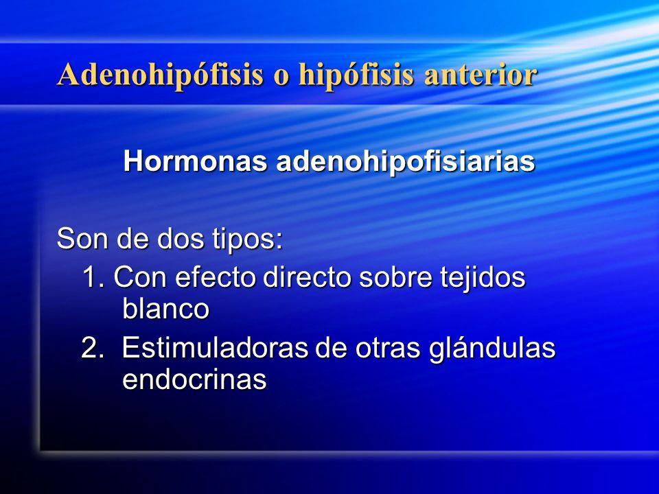 Adenohipófisis o hipófisis anterior Hormonas adenohipofisiarias Son de dos tipos: 1. Con efecto directo sobre tejidos blanco 2. Estimuladoras de otras