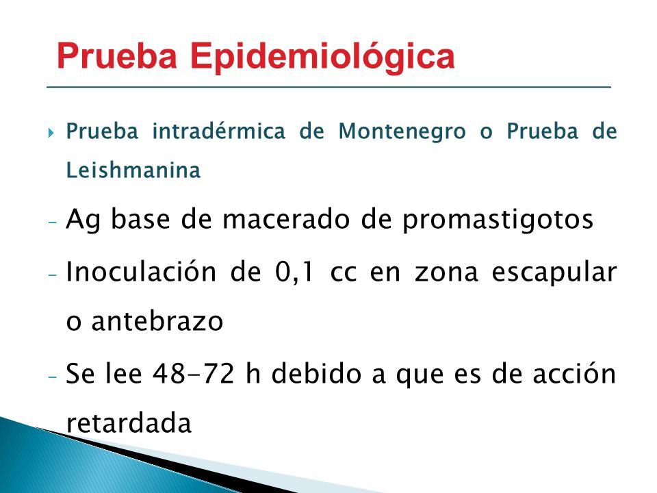 Prueba intradérmica de Montenegro o Prueba de Leishmanina - Ag base de macerado de promastigotos - Inoculación de 0,1 cc en zona escapular o antebrazo