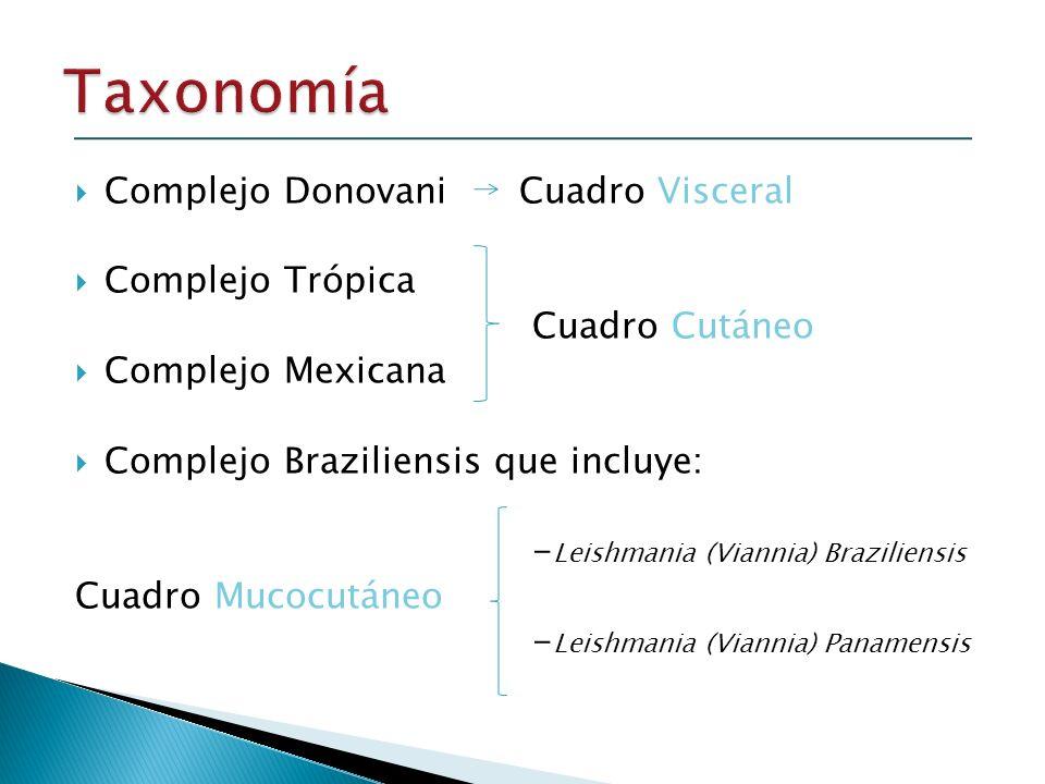 Complejo Donovani Cuadro Visceral Complejo Trópica Cuadro Cutáneo Complejo Mexicana Complejo Braziliensis que incluye: - Leishmania (Viannia) Brazilie